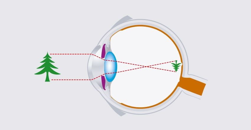 How eyesight works animation
